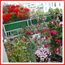 wp-content/uploads/2013/05/flowers-on-balcony102.jpg