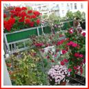 wp-content/uploads/2013/05/flowers-on-balcony102.jpg