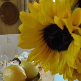 breakfast-in-provence-table-setting13