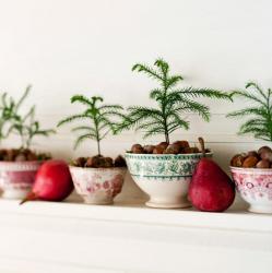 tiny-coniferous-winter-decor1-3