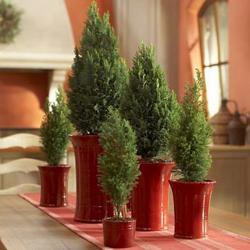 tiny-coniferous-winter-decor1-4