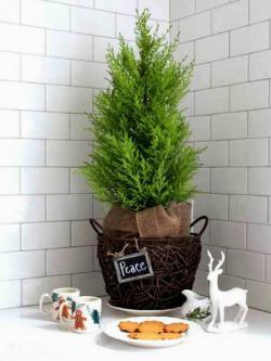 tiny-coniferous-winter-decor1-5