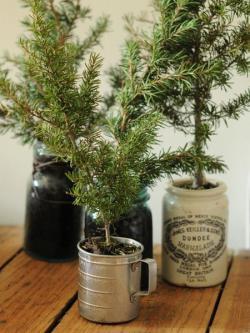 tiny-coniferous-winter-decor1-6