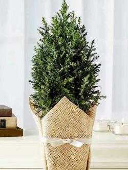 tiny-coniferous-winter-decor1-7