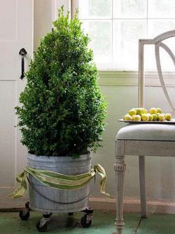 tiny-coniferous-winter-decor1-8
