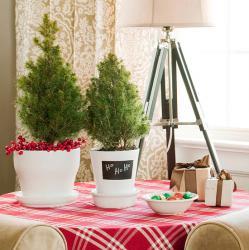 tiny-coniferous-winter-decor2-4
