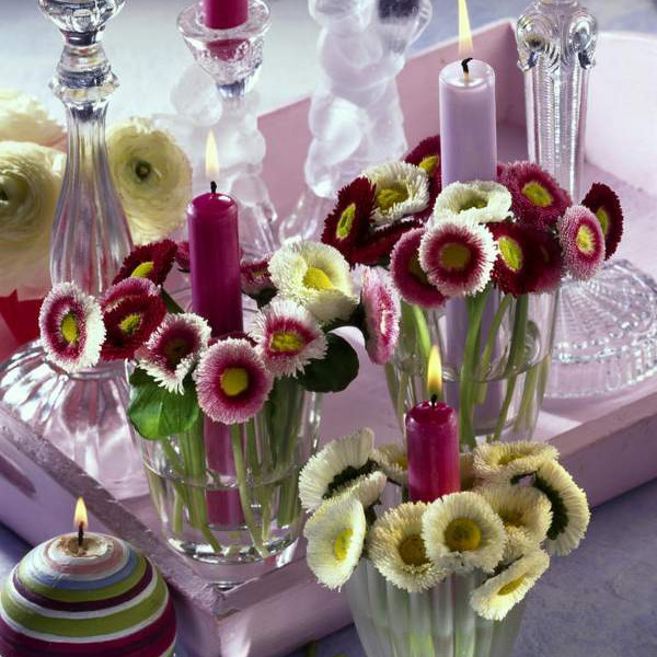 bellis-perennis-spring-decorating