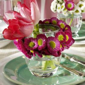 bellis-perennis-spring-decorating10