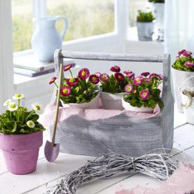 bellis-perennis-spring-decorating12