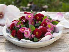 bellis-perennis-spring-decorating17