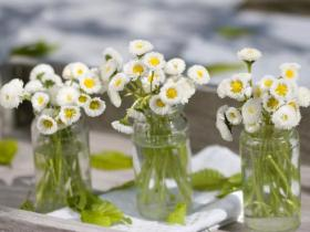 bellis-perennis-spring-decorating19
