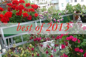 best1-flowers-on-balcony