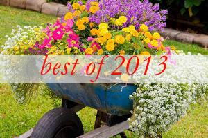best2-garden-flowers-mix-in-container