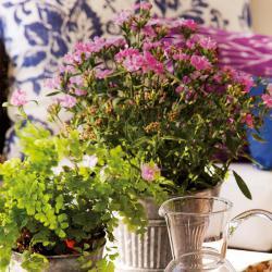 spanish-house-full-of-flowers-and-light3