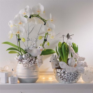 blooming-plants-new-year-decoration1