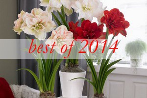 best-2014-decor-ideas8-amaryllis-centerpiece-ideas
