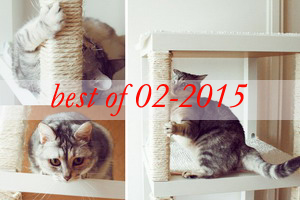 best9-ikea-furniture-hacks-for-cats