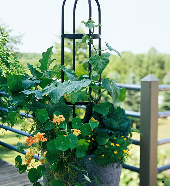 design-ideas-to-grow-veggies-in-containers13
