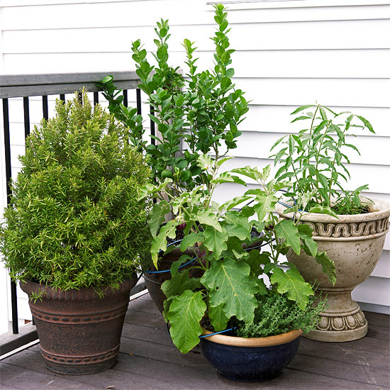 design-ideas-to-grow-veggies-in-containers15