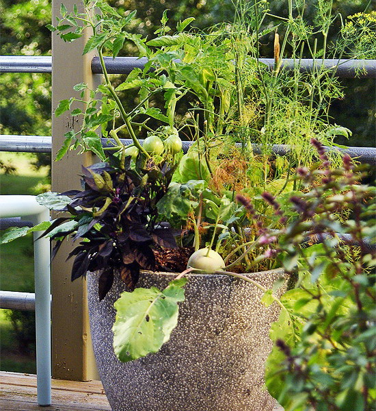design-ideas-to-grow-veggies-in-containers5