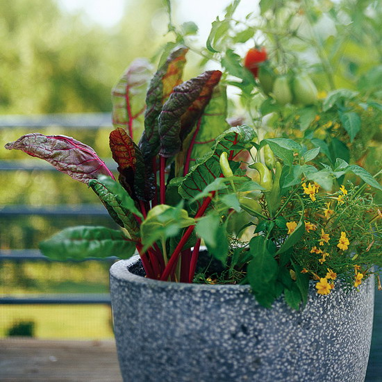 design-ideas-to-grow-veggies-in-containers8