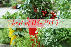 best5-design-ideas-to-grow-veggies-in-containers