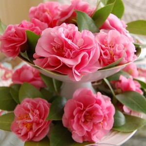 spring-tablescape-with-camellias19