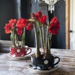 amaryllis-centerpiece-ideas2-1.jpg