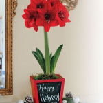 amaryllis-centerpiece-ideas2-10.jpg