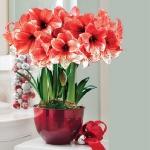 amaryllis-centerpiece-ideas2-14.jpg