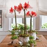 amaryllis-centerpiece-ideas2-15.jpg
