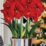 amaryllis-centerpiece-ideas2-16.jpg