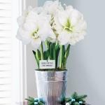 amaryllis-centerpiece-ideas2-17.jpg