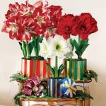 amaryllis-centerpiece-ideas2-18.jpg