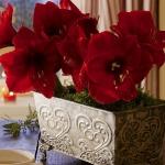amaryllis-centerpiece-ideas2-2.jpg