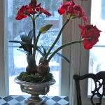 amaryllis-centerpiece-ideas2-5.jpg