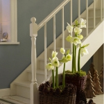 amaryllis-centerpiece-ideas2-7.jpg