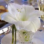 amaryllis-centerpiece-ideas4-3.jpg