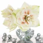 amaryllis-centerpiece-ideas4-6.jpg