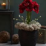 amaryllis-centerpiece-ideas5-8.jpg