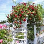 arbor-and-archway-in-garden1-5.jpg