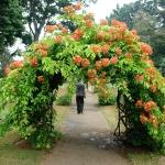 arbor-and-archway-in-garden1-17.jpg