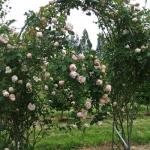 arbor-and-archway-in-garden1-24.jpg