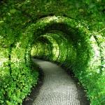 arbor-and-archway-in-garden2-5.jpg