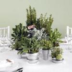 aromatic-spice-herbs-decoration2-4.jpg