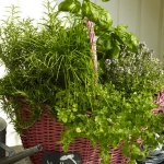 aromatic-spice-herbs-decoration2-5.jpg