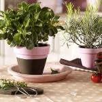 aromatic-spice-herbs-decoration4-1.jpg