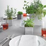 aromatic-spice-herbs-decoration4-7.jpg
