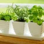 aromatic-spice-herbs-decoration4-8.jpg