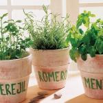 aromatic-spice-herbs-decoration5-1.jpg